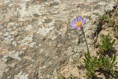 Een bloem in de woestijn Stock Afbeeldingen