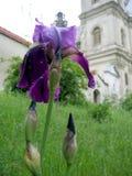 Een bloem en een kerk stock foto's