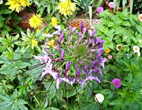 Een bloem onder bloemen Stock Afbeelding