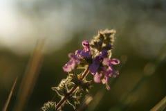 Een bloem op een gebied Stock Fotografie