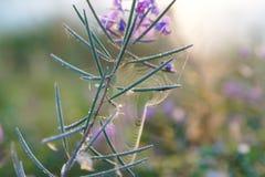 Een bloem op een gebied Stock Afbeeldingen