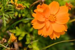 Een bloem voor moedersdag Royalty-vrije Stock Fotografie