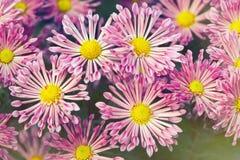 Een bloemachtergronden Royalty-vrije Stock Afbeeldingen