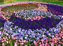 Een bloembed Stock Afbeelding