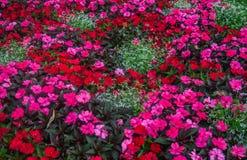 Een bloembed van tot bloei komende balsem in een stadspark royalty-vrije stock foto's