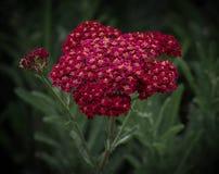 Een Bloemenbijenkorf Stock Afbeeldingen