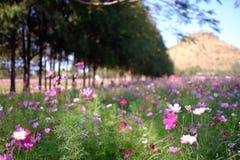 Een bloemlandbouwbedrijf in Thailand Stock Afbeeldingen