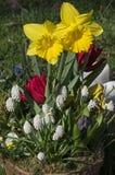 Een bloempot met bloeiende gele gele narcissen Royalty-vrije Stock Afbeeldingen