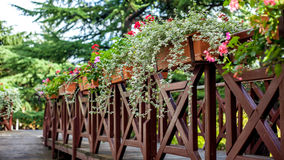 Een Bloemrijk balkon in een park, Georgië royalty-vrije stock fotografie