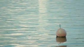 Een boei die op de oppervlakte van het water drijven stock videobeelden
