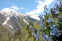 Een boeket van blauwe vergeet-mij-nietjes met sneeuwbergen, blauwe hemel en groene bomen op de achtergrond royalty-vrije stock foto's