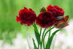 Een boeket van bloemen op een groen lichtachtergrond Rode pioentulpen in een vaas Plaats voor uw tekst Mening van het venster stock foto's