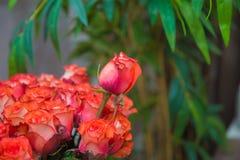Een boeket van bloemenboeket van honderd roze rozen Bloemboeket van 100 rode rozen Stock Fotografie