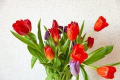 Een boeket van de mening van het tulpenclose-up van rood en purper met groene bladeren op een witte achtergrond stock afbeeldingen