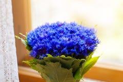 Een boeket van de mooie lente bloeit blauwe korenbloemcyanus Royalty-vrije Stock Fotografie