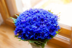Een boeket van de mooie lente bloeit blauwe korenbloemcyanus Royalty-vrije Stock Afbeelding