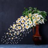 Een boeket van kamilles in een vaas De wind blaast de bloemblaadjes weg stock afbeelding