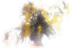 Een boeket van mimosa Royalty-vrije Stock Fotografie