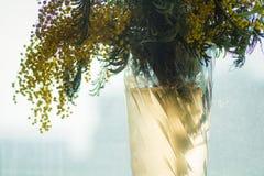 Een boeket van mimosa Royalty-vrije Stock Afbeelding