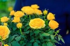 Een boeket van mooie gele rozen als gift stock foto's
