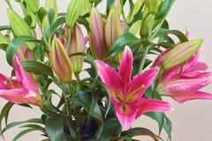 Een boeket van mooie roze lelies met niet knoppen bloeide Boeket van bloemen stock foto