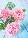 Een boeket van mooie roze pioenen op een blauwachtige houten lijst tegen zacht-geconcentreerde achtergrond Royalty-vrije Stock Afbeelding
