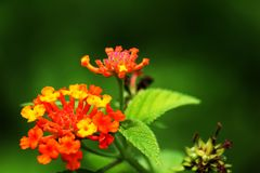 Een boeket van oranje bloemen komt duidelijk uit stock fotografie