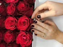 Een boeket van rode die rozen in een hoedendoos worden verfraaid op een lichte achtergrond royalty-vrije stock foto