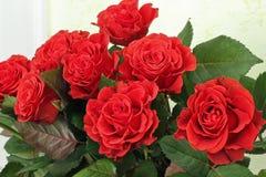 Een boeket van rode rozen De rode rozen sluiten omhoog stock foto