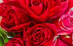 Een boeket van rode rozen die neer eruit zien Royalty-vrije Stock Afbeeldingen