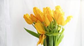 Een boeket van rode tulpen in een vaas op de vensterbank Een gift voor Royalty-vrije Stock Foto's
