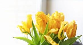 Een boeket van rode tulpen in een vaas op de vensterbank Een gift voor Royalty-vrije Stock Afbeelding