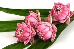 Een boeket van roze lotusbloem op een witte achtergrond royalty-vrije stock afbeeldingen