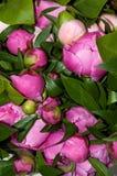 Een boeket van roze pioen Stock Afbeelding