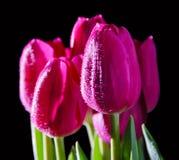 Een boeket van tulpen op een zwarte Stock Foto's