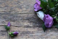 Een boeket van twee purpere bloemen en één wit, evenals twee panden zijn op een houten achtergrond stock foto