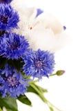 Een boeket van witte en blauwe bloemen (regeling van korenbloemen Stock Fotografie
