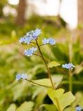 Een Bokeh die van Één of andere Mooie Kleine en Blauwe Brunnera-macrophyl wordt geschoten Royalty-vrije Stock Afbeeldingen