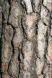 Een bomenschors - verticaal Stock Foto