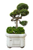 Een bonsaiboom in geïsoleerd op een wit Royalty-vrije Stock Afbeeldingen