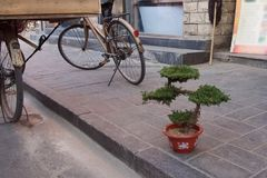 Een bonsaiboom in een pot bevindt zich op de stoep in stree royalty-vrije stock foto