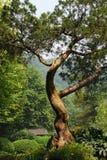 Een boom Stock Afbeelding
