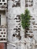 Een boom Royalty-vrije Stock Fotografie