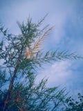 Een boom Stock Afbeeldingen