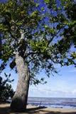 Een boom Royalty-vrije Stock Foto