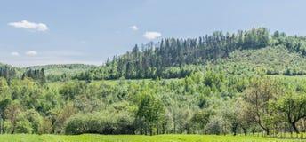Een boom-behandelde heuvel in het Oekraïense dorp royalty-vrije stock fotografie