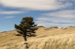 Een boom bevindt zich alleen Stock Fotografie