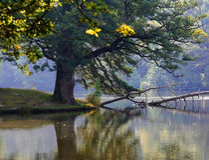 Een boom bij het wilde meer. stock fotografie