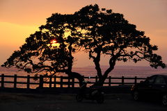 Een boom bij zonsondergang Stock Afbeelding