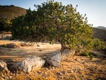 Een boom bij zonsondergang Stock Afbeeldingen